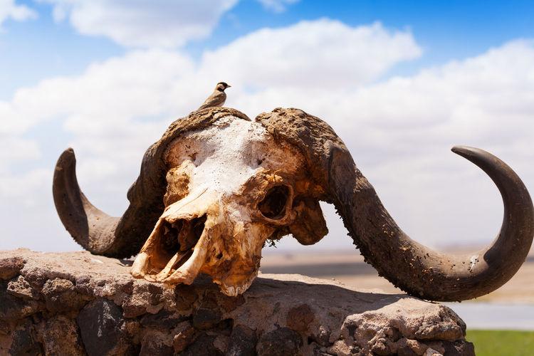 Close-up of animal skull on rock