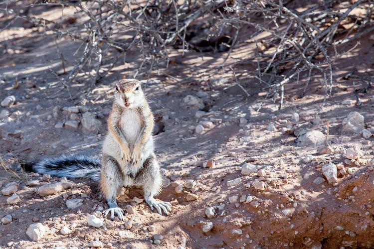 Squirrel sitting on a field