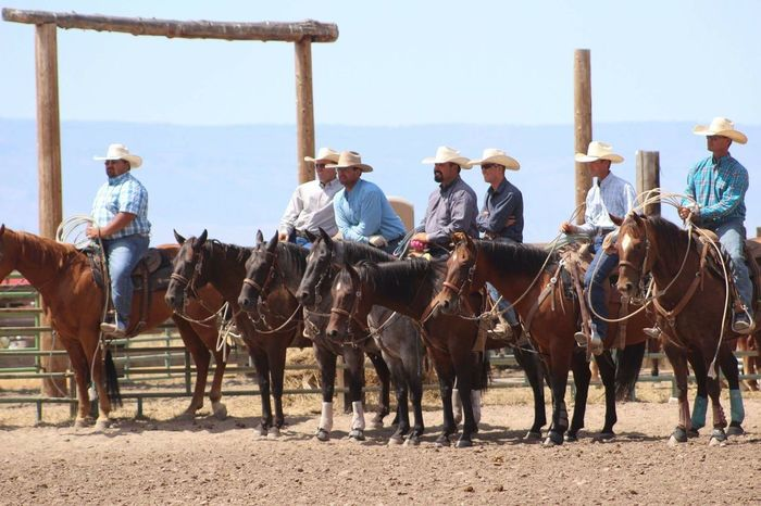 Cowboys Animal Themes Domestic Animals Mammal Working Animal Horse Livestock Full Length Side View Clear Sky People And Places Day Peopleandplaces Working Animals Outdoors Sky Photographer Photography Photo Bridle Western Oldwest Cattle Work