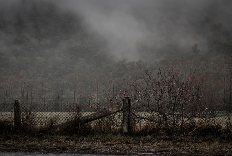 Morning mist over the poplar plantation along Lower Macdonald River No People Dramatic Sky Beauty In Nature Tranquility Tree Scenics Nature Idyllic Cherry Blossom Mountain Fog Mist Morning Moody Grey Trees Winter Grass Field Nature Landscape Painterly Fence Cinematic EyeEmNewHere
