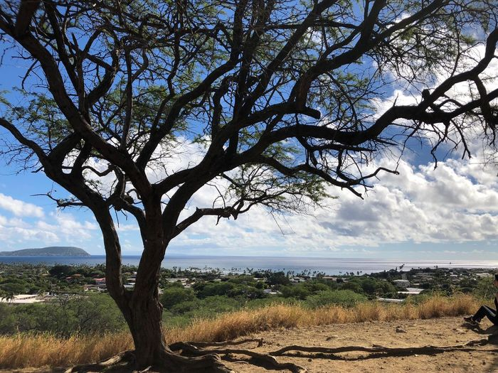 Diamond Head Tree By The Sea Tree Siloutte Diamond Head Lookout Ocean View Tree Landscape Nature Scenics Sky Beauty In Nature Tranquility