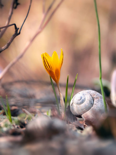 Plant Flower Flowering Plant Beauty In Nature Close-up Fragility Growth Vulnerability  Nature Selective Focus Freshness No People Petal Iris Crocus Outdoors Day Land Inflorescence Flower Head