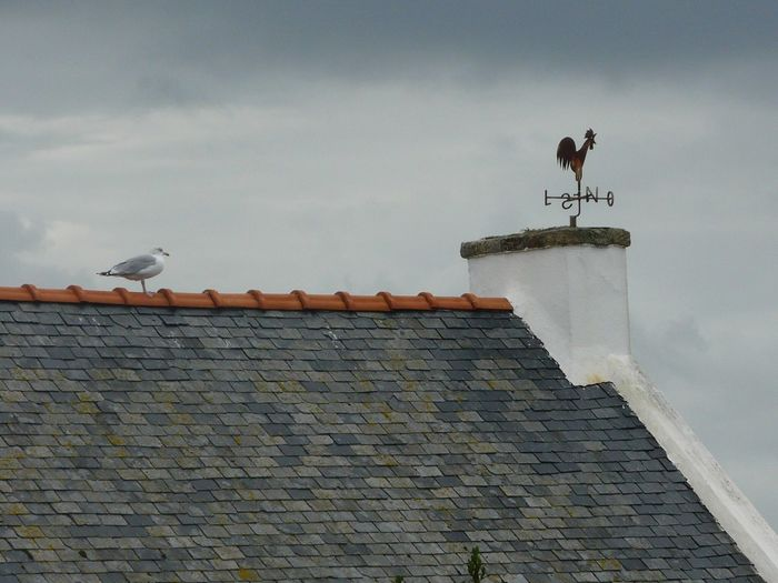 Seagull perching on roof against sky