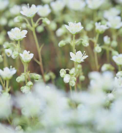 The Great Outdoors - 2017 EyeEm Awards Flower Beauty In Nature Growth Petal Blooming Outdoors White Flower 花々 華々しく Flower Collection