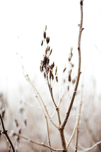 Focus On Foreground Nature No People Close-up Plant Fragility Day Beauty In Nature Tranquility Growth Cold Temperature Outdoors Selective Focus Land Frozen Flower Snow Winter Vulnerability  Dry