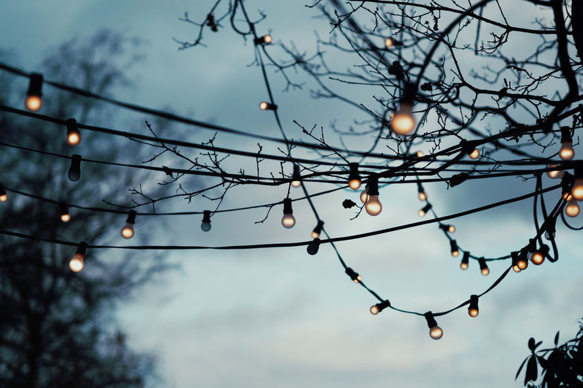 Christmas Lights Christmas Decoration Low Angle View Tree Sky Focus On Foreground Nature Dusk No People Lighting Equipment Plant Illuminated Outdoors Cloud - Sky Branch Beauty In Nature Close-up Bare Tree Tranquility Silhouette Decoration Light