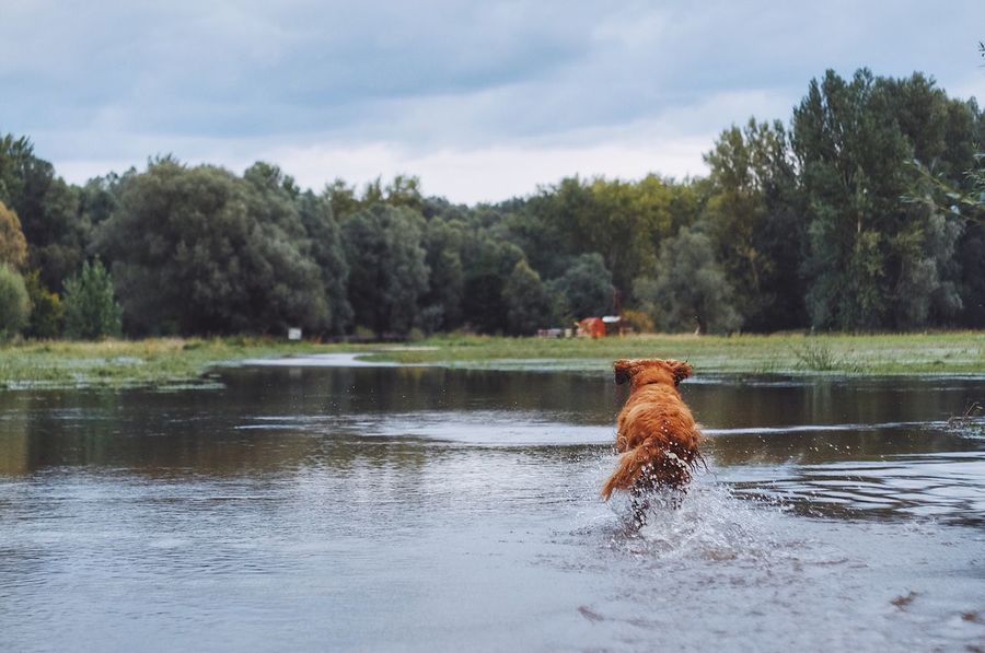 Water Tree Animal Themes One Animal Domestic Animals Mammal Pets Dog Lake Waterfront Nature Day Outdoors Sky No People Beauty In Nature The Week On EyeEm Fujifilm_xseries Nature Golden Retriever