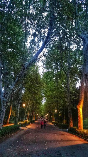 Sevilla SPAIN Andalucía Parque De Maria Luisa Parque  Anochecer Park Paseo Walking Arboles Trees