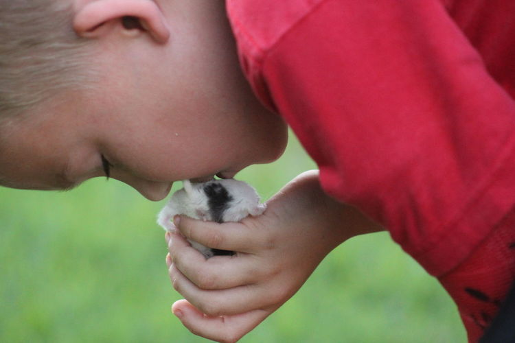 Hamster Love Kiss ✌ Lovelovelove Pet Hamster ♡ Hamsters Hamster Love