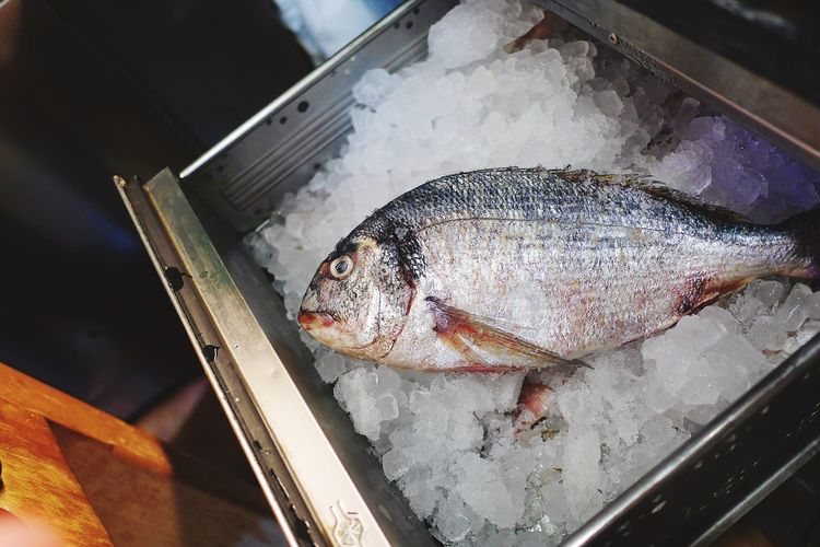 Close-up of fish on crushed ice