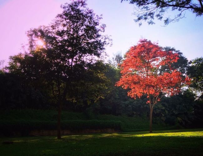 Tree Autumn Beauty In Nature Outdoors Park - Man Made Space Nature Sky No People Day Grass