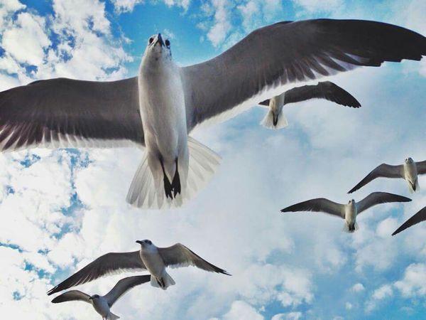 Flight Seagulls Seaside Photography Art Ocean Colorful OpenEdit Birds Life Is A Beach Photos Around You