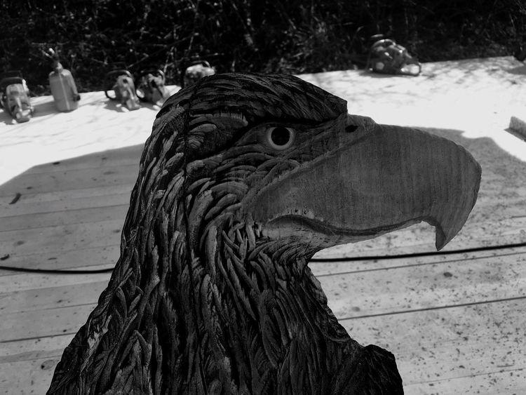 Animal Themes One Animal Bird Adler Eye EyeEm Gallery EyeEm Best Edits Eye4photography  EyeEm Masterclass Wood - Material Sculpture EyeEm Best Shots