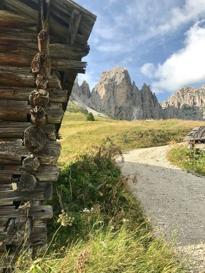 Mountain Green Color Nature Wood Wood - Material Dolomites, Italy