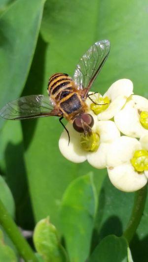 Foto Original Polinizando Beauty In Nature
