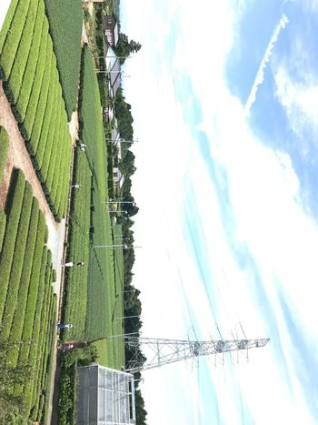 not see Mt. Fuji. 😆💦 fields of green tea. Cloud - Sky Greentea Outdoors Beauty In Nature Iphonephotography Streamzoofamily