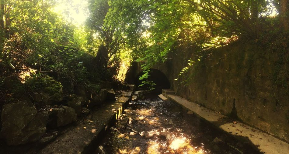 Tree Sunlight Nature Outdoors No People Water Tunnel Beauty In Nature Tranquility The Way Forward Forest