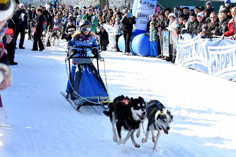 Frauenwald Husky Husky Love Husky ♡ Huskyphotography Nikon D500 Race Sigma Snow Snowing