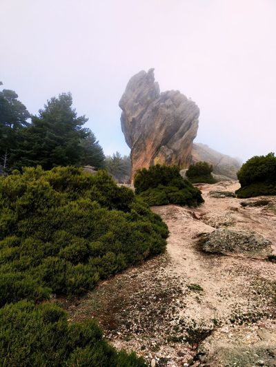 Cuando se levanta la niebla Nature Nature Photography Nature_collection Landscape_photography Canon Soria Nature Photography Landscape Travel Forest Forestwalk Pine Tree EyEmNewHere Niebla Mist Atmosphere Atmospheric Mood Rock Formation Soria SPAIN Exploring Winter No People Outdoors Day