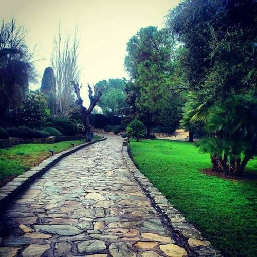 Italica Tree Tranquil Scene Day Plant Nature Italics Sevilla Seville
