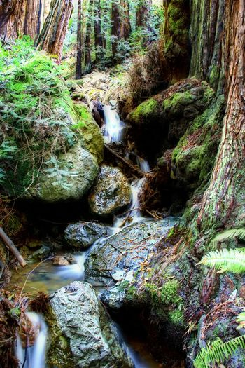 Little Waterfall on the way of Ocean view trail in Muir Woods. Slow Shutter Orton Effect Canon60d