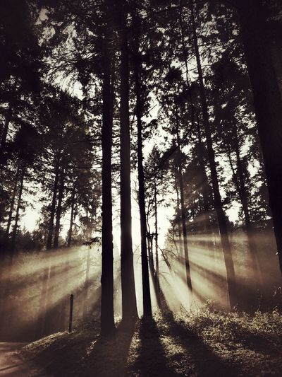 Autumn morning Light And Shadow Tree Plant Nature No People Day Silhouette Autumn Mood Scenics - Nature Tranquil Scene Sunlight Forest
