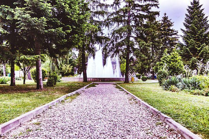 Tree Tranquility Park Fountain