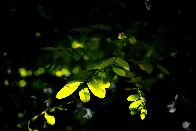Leaf 🍂 Plants