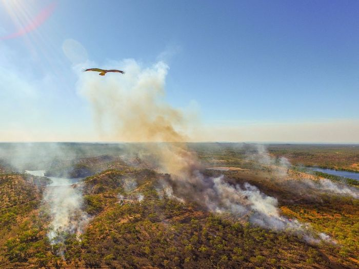Like an eagle in the sky. Flying Drone  Droneshot Drones Dronepointofview Birds Eye View Bushfire Eagle Eagle Portrait Eaglephotography Eagles Nature EyeEm Best Shots EyeEm Nature Lover EyeEmBestPics Beautiful Beautiful Nature Darwin Northern Territory Australia Australian Landscape Australian Outback Australian Birds First Eyeem Photo Flying High Flying High