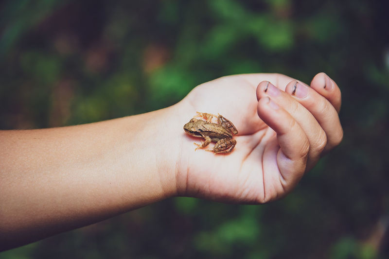 Close-up of person holding frog