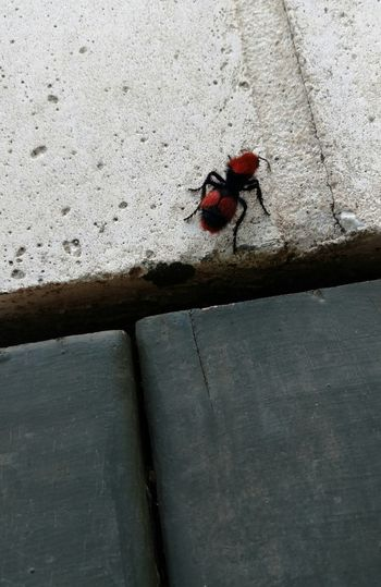 Bug Redandblackinsect Check This Out Hairyinsect Neverseenbefore Interesting Mydeck Maybeyouknowitsname
