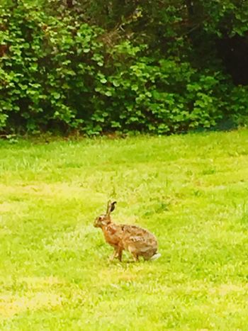 In the garden Grass One Animal Field Nature Animals In The Wild Outdoors iPhone