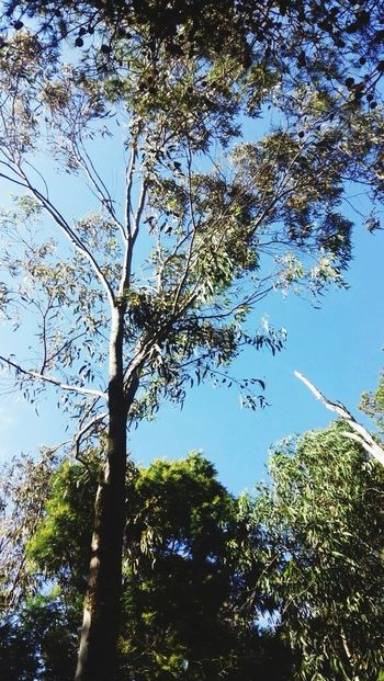 Life *-* Trees Today :)