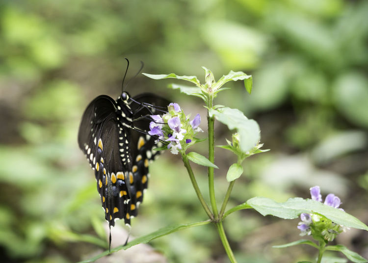 Nature Beauty In Nature Butterfly Butterfly - Insect Butterfly Collection Close-up Flower Flowering Plant Insect Macro Macro Nature Nature Nature_collection Outdoors Pollination