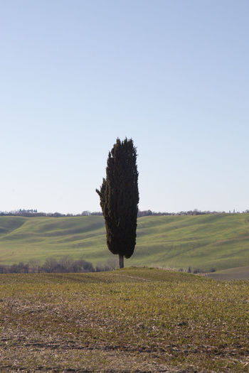 Sky Landscape Land Environment Field Nature Scenics - Nature Tranquil Scene Outdoors Plant Clear Sky Tranquility Grass Beauty In Nature Tree Day Growth No People Copy Space Agriculture Rural Scene Crete Senesi Pienza Val D'orcia Tuscany Tuscany Hills Tuscany Countryside Cypresses Road