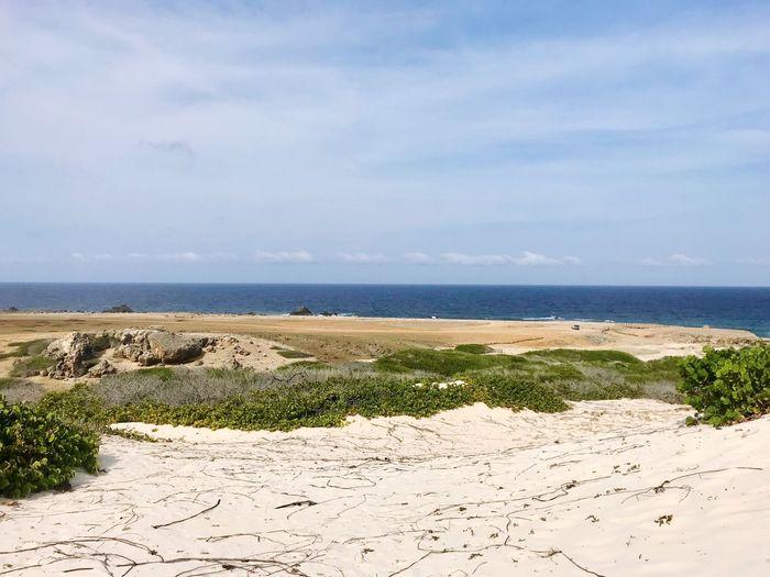 Aruba Arikok National Park Ocean Island Caribbean Beach Sand Sea Scenics Nature Tranquility Tranquil Scene Horizon Over Water Sky Beauty In Nature Water Day No People Outdoors Landscape Grass Sand Dune Marram Grass