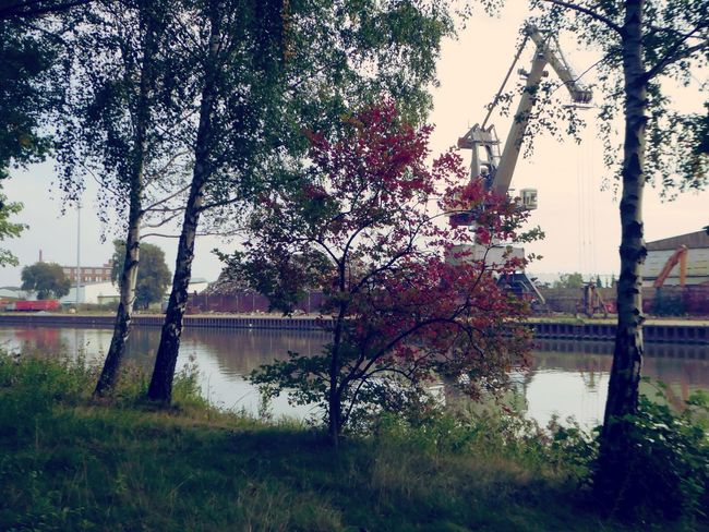 Focus On The Beauty Am Mittellandkanal In Hannover You Raise Me Up✨ Enjoying The View For My Friends 😍😘🎁 Simple Beauty My Soul's Language Is📷 Tranquility Waterway Inland Shipping The Fall Autuum At The Lake Water Waterway Favorite Placesbirches😍