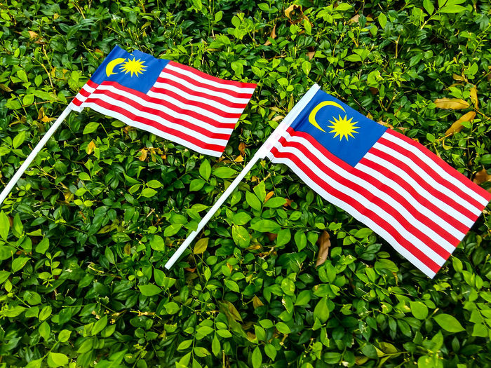 Malaysia Flags Arrangement Culture Flag Focus On Foreground Green Green Color Identity Leaf Malaysia Malaysia Flag National Flag No People Outdoors Patriotism Plant Stars And Stripes Striped The Week On Eyem Tranquility Vibrant Color Wind The Week Of Eyeem The Week On EyeEm A Bird's Eye View