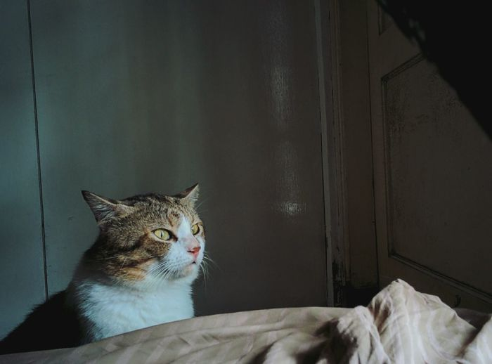 Cat looking away while sitting on bed at home