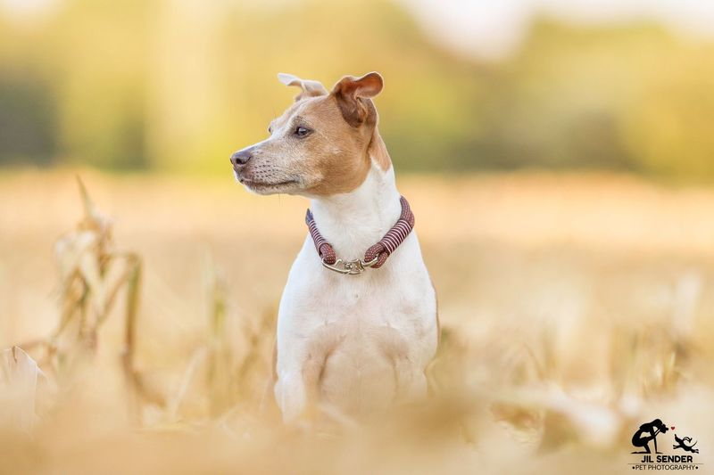 My dog Luna Luna Dog Canon EOS 700D Canon 200mm 2.8 Canon 100mm First Eyeem Photo Jack Russel Terrier Jackrussell Pet Pet Photography