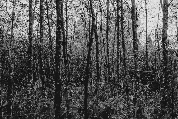 Forest in
