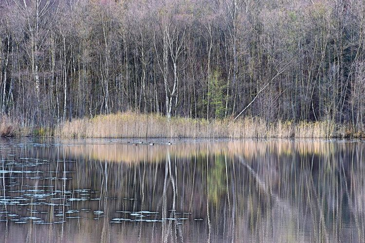 Bogensee Nature Photography Bare Tree Beauty In Nature Day Forest Grass Lake Nature Nature_collection Naturelovers No People Outdoors Scenics Tranquility Tree Water Waterbirds