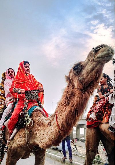 Ride a camel, it leaves you speechless. Took the shot. Vacations Cloud - Sky Outdoors This Week On Eyeem Neighbourhood EyEmNewHere Neighborhood Togetherness Camel Domestic Animals Arts Culture And Entertainment Amusement Park Beauty In Nature Popular You Raise Me Up✨ Real People Hello World We Are Photography, We Are EyeEm Looking At Camera Lifestyles Women Eyem Diversity Check This Out