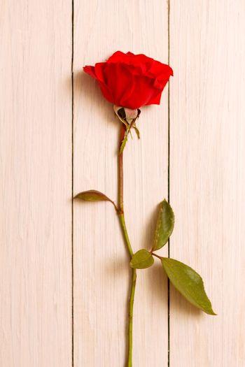 red rose 🥀⚘🌷