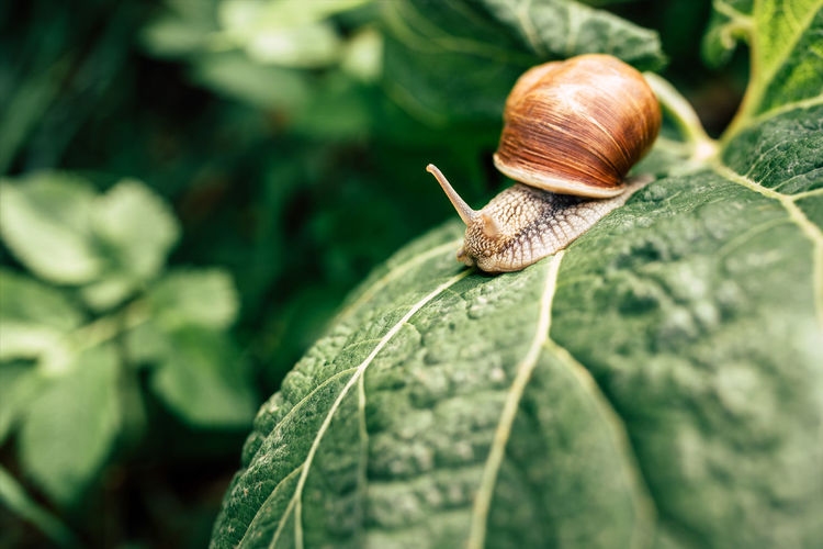 Mollusk Gastropod Snail Invertebrate Animal Wildlife Close-up Shell Animal Animal Shell Animals In The Wild Animal Themes One Animal Leaf Plant Part Day Focus On Foreground Nature No People Plant Green Color Outdoors Crawling