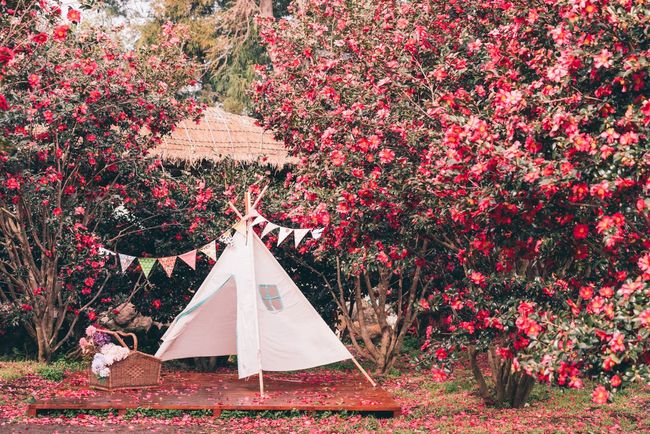 ASIA Beautiful Beautiful Nature Camellia Christmas Jeju Korea Weekend Architecture Autumn Beauty In Nature Camellia Flower Christmas Tree Day Flower Jejuisland Landscape Leaf Nature No People Outdoors Park Red Scenery Tree EyeEm Ready   EyeEmNewHere