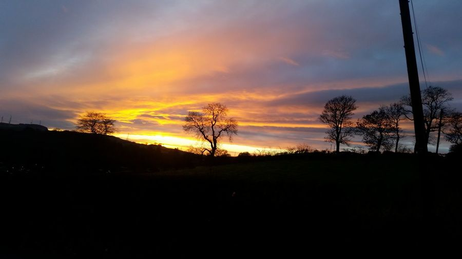 Sunset Tree Dramatic Sky Silhouette Nature Sky Beauty In Nature No People Outdoors Tranquility The Best Wee Country In The World EyeEm_Scotland Neilston
