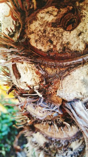 Taking Photos Mobile Photography Palm Bark Nature Photography