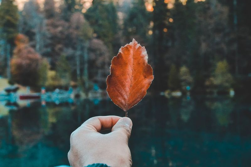 Primavera Leaf Photography Herbst🍁 EyeEm Selects Human Hand Human Body Part Holding One Person Focus On Foreground Real People Outdoors Day Nature Tree Beauty In Nature Lifestyles