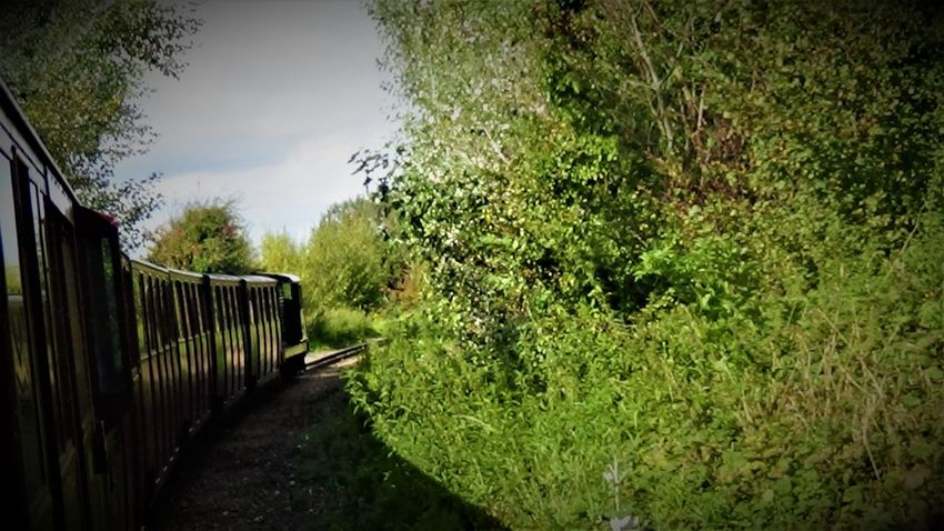 Train Arriving into New Romney Station 2017 2017 2017 Year Great Britain Kent Railways Kent UK RH&DR RHDR Romney Hythe And Dymchurch Railway Romney, Hythe & Dymchurch Railway Travel Travel Photography UK Railway United Kingdom Day Growth Kent England Nature No People Outdoors Sky Travel And Leisure Travel And Tourism Travelphotography Tree Uk England